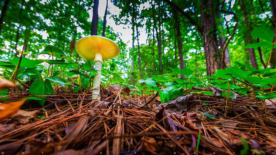 A mushroom in my back yard